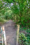 Öffnen zu einem Waldweg entlang einer sonnengesprenkelten Bahn Lizenzfreie Stockfotografie