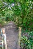 Öffnen zu einem Waldweg entlang einer sonnengesprenkelten Bahn Stockbild