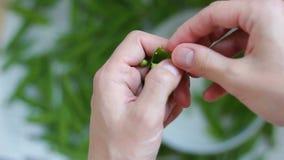 Öffnende grüne Erbsenhülsen stock video footage