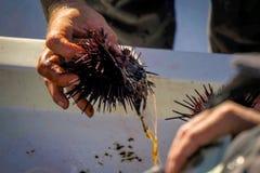 Öffnungs-Seeigel auf dem boatside Stockfotografie