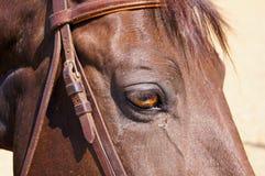 Öga av den bruna hästdetaljen Arkivfoto