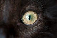 Öga av den svarta katten Makro Royaltyfri Bild