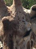 Öga av en giraff arkivfoton