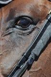 Öga av en häst Arkivfoto