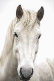 Öga av en häst Royaltyfri Fotografi