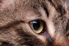 Öga av en katt i övre bild för Royaltyfri Foto
