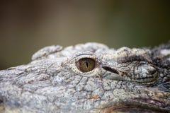 Öga av en Nile Crocodile Arkivfoto