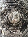 Öga av guden Royaltyfria Bilder
