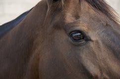Öga av hästen Arkivfoton