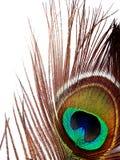 Öga av påfågeln - detalj royaltyfri bild