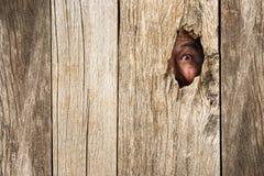 Öga av vampyren i trähål Fotografering för Bildbyråer