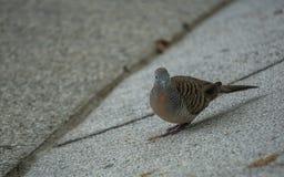 Öga för fågel` s Fotografering för Bildbyråer