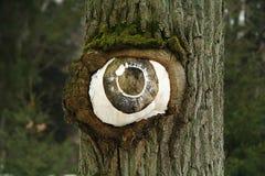 Öga från trädet Royaltyfri Fotografi
