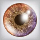Öga Iris Realistic Vector Anatomibegreppsillustration vektor illustrationer