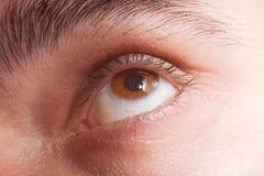 Öga med makro för kontaktlins Royaltyfri Foto