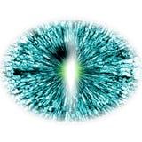 Öga RTG Mellersta format av öppna ögon eye illustrationen vektor illustrationer