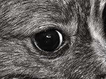Ögat av en hund royaltyfri fotografi