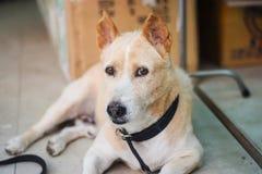 Ögat av hunden Fotografering för Bildbyråer