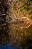 Ögat av naturen Fotografering för Bildbyråer