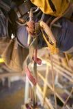 Ögla för ben för descender för reptillträdesutrustning som hänger på sidan av öglan för sele för inspektörabseilersäkerhet royaltyfria foton