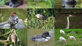 Ögla 4k UHD för djur för glidbanashow sömlös arkivfilmer