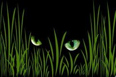 ögon Arkivbilder