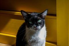 Ögon av älskade katter royaltyfri fotografi