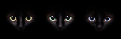 Ögon av den siamese katten i mörkret Olik ögoncollage arkivfoto