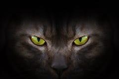 Ögon av den svarta katten i mörker royaltyfri bild