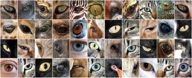 Ögon av djur och folk arkivfoto