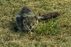 Ögon av djurlivet royaltyfri foto