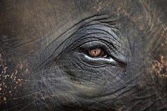 Ögon av elefanter Royaltyfria Foton