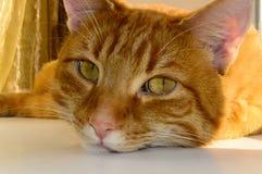Ögon av en härlig röd katt Royaltyfri Fotografi