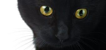 Ögon av ett slut för svart katt upp på en vit bakgrund royaltyfria bilder