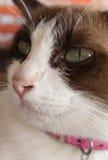 Ögon av katten royaltyfria bilder