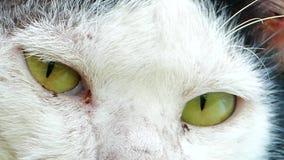 Ögon av katten arkivfilmer