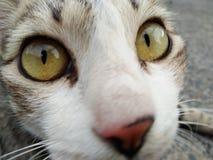 Ögon av katten, suddig bakgrund fotografering för bildbyråer