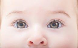 Ögon av lite flickan arkivbilder