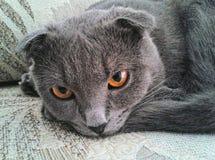 Ögon av min katt royaltyfri fotografi