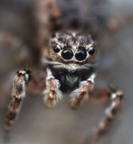 Ögon av spindeln arkivfoto