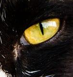 Ögon för en katt Fotografering för Bildbyråer