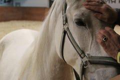 Ögon för häst` ett s, häst Foto av en älsklings- närbild arkivfoto