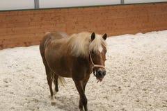 Ögon för häst` ett s, häst Foto av en älsklings- närbild arkivbild