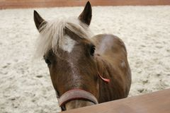 Ögon för häst` ett s, häst Foto av en älsklings- närbild royaltyfri foto
