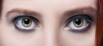Ögon för hasselträ för kvinna` s med makeup- och bruntögonbryn Royaltyfri Foto