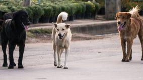 Ögon för svart hund av förälskelse med den gula hunden, med den bruna hunden a royaltyfri fotografi
