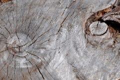 Ögon i natur: Abstrakt trädstam Arkivbilder