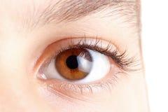 Ögon med långa härliga ögonfrans, brunt, makro Arkivbild