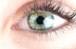 Ögon och långa ögonfrans arkivbilder