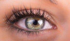 Ögon och långa ögonfrans Fotografering för Bildbyråer